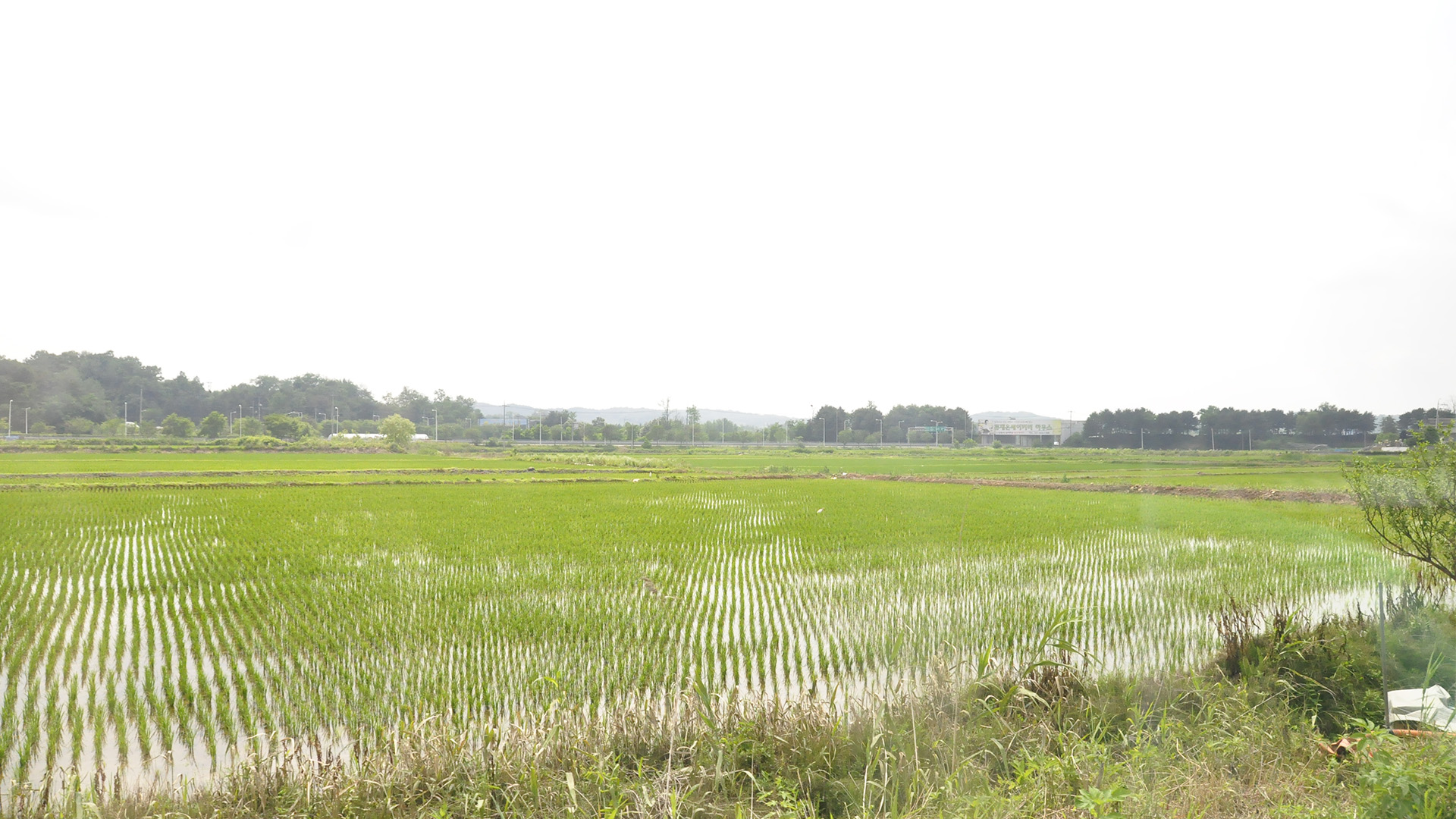 Rice fields near Paju City